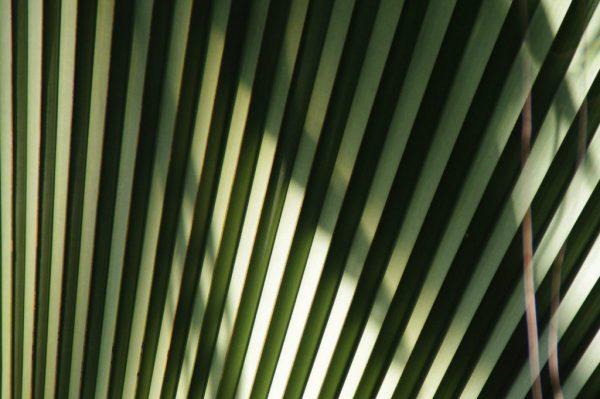 Palmenblatt - Migränekopfschmerz